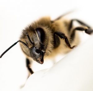 extreme close up on bee